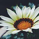 pollen by helloimbethany