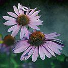 Echinacea flowers by walstraasart