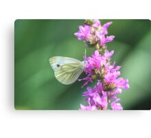 Butterfly in HDR Canvas Print