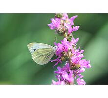 Butterfly in HDR Photographic Print