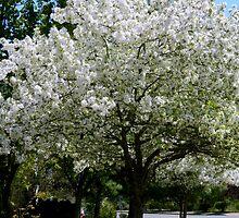 Spring Walk - II   ^ by ctheworld