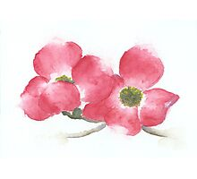 Red Dogwood Flowers in Watercolor Photographic Print