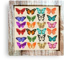 Butterflies,water color,rustic,vintage,shabby chic,elegant,country chic, Canvas Print