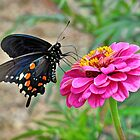Butterfly on Flower by venny