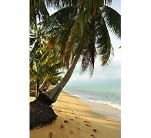 tropical beach with coconut palm trees Photographic Print