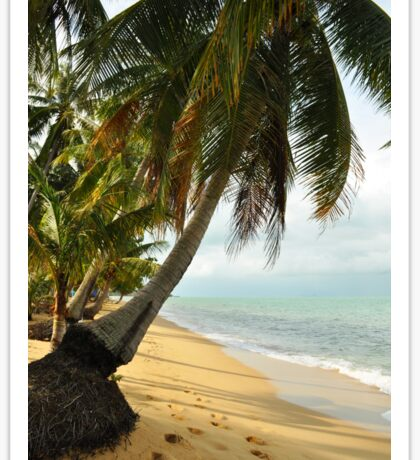 tropical beach with coconut palm trees Sticker