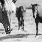 Horses by DoraBirgis