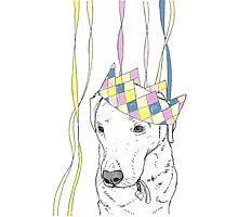 Party Animal ! Labrador Photographic Print