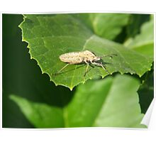 Insect on a green leaf Poster