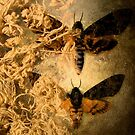 Strings and wings by Susan Ringler