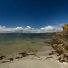 Sunny Strangford Lough by Jon Lees