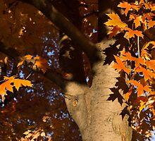 Crisp, Orange Autumn Shadows by Georgia Mizuleva