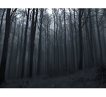 Whisper of the Trees Photographic Print