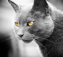 Cat by Michelle  Edwards Insights Photography