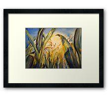 Sun Kissed Corn Framed Print