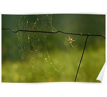 Spider on Barbed Wire Poster