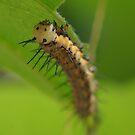Red Postman Caterpillar by Lindie Allen
