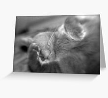 Too Bright! Greeting Card