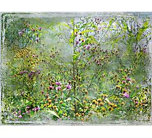 A Window of Dreams Photographic Print