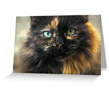 Portrait of a Blue Eyed Cat. Greeting Card