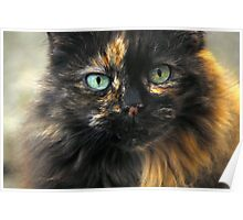 Portrait of a Blue Eyed Cat. Poster