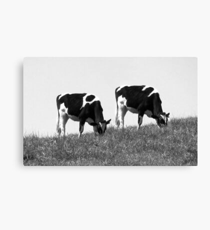 Synchronized Grazing Canvas Print