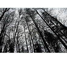 Tall Forest Photographic Print