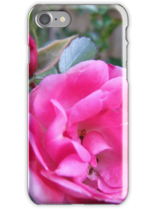 Pink Rose by Andrew Turley