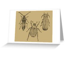 Vintage Beetles Greeting Card