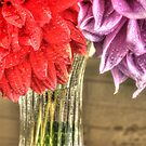 Two Dahlias - 0852 by ©  Paul W. Faust