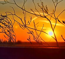Sunset through the bushes by Avril Harris