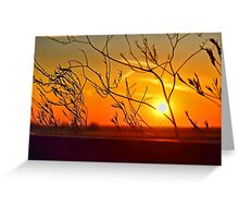 Sunset through the bushes Greeting Card