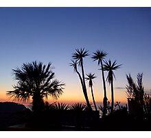 Majorcan Palms At Sunset Photographic Print