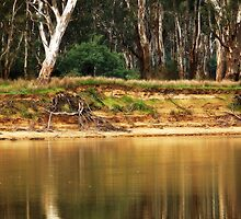 Murray River Richness by Lozzar Landscape