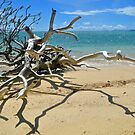 Driftwood and Shadows by Margaret Stevens