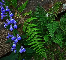 Blue Flowers, Fern, Rock by cclaude