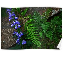 Blue Flowers, Fern, Rock Poster