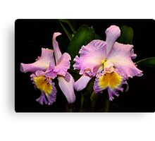 A pair of Orchids Canvas Print