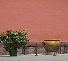 Plain but beautiful by SCPhotos