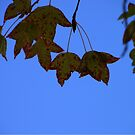 Autumn Blues by Michelle Munday