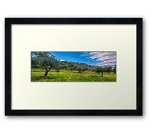 Spanish olive grove in springtime Framed Print