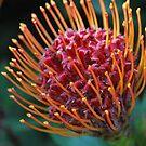 Joyous Protea by Lozzar Flowers & Art