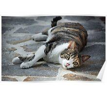 Cosy Kitten Poster