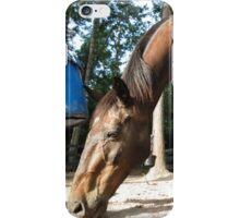 Zorro iPhone Case/Skin