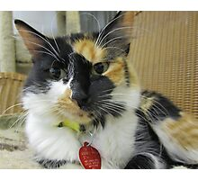 Cassy Waiting for Adoption Photographic Print