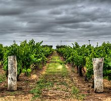 Coonawarra Vineyard by Thomas Stayner