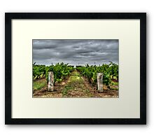 Coonawarra Vineyard Framed Print