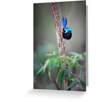Red-winged fairy wren Greeting Card