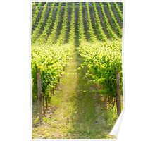 Tuscany, Chianti vineyards Poster
