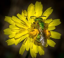 Metallic Green Bee by RandyHume